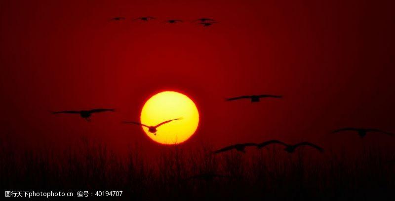 白鹤仙鹤图片