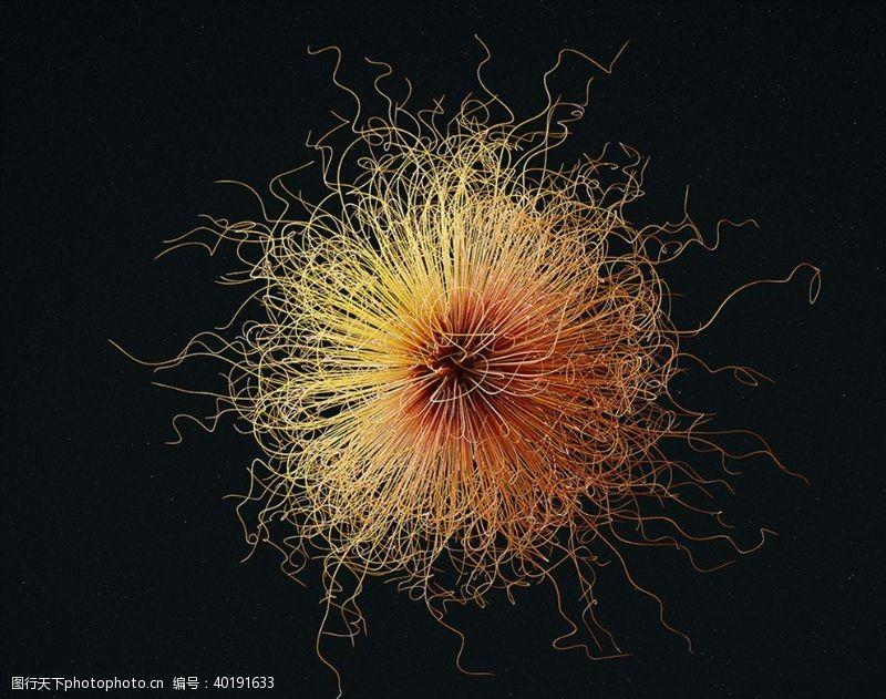 C4D模型微生物细菌病毒抽象图片