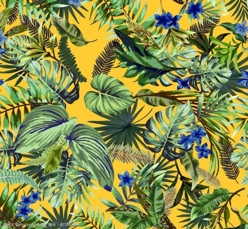棕榈叶热带植物图片