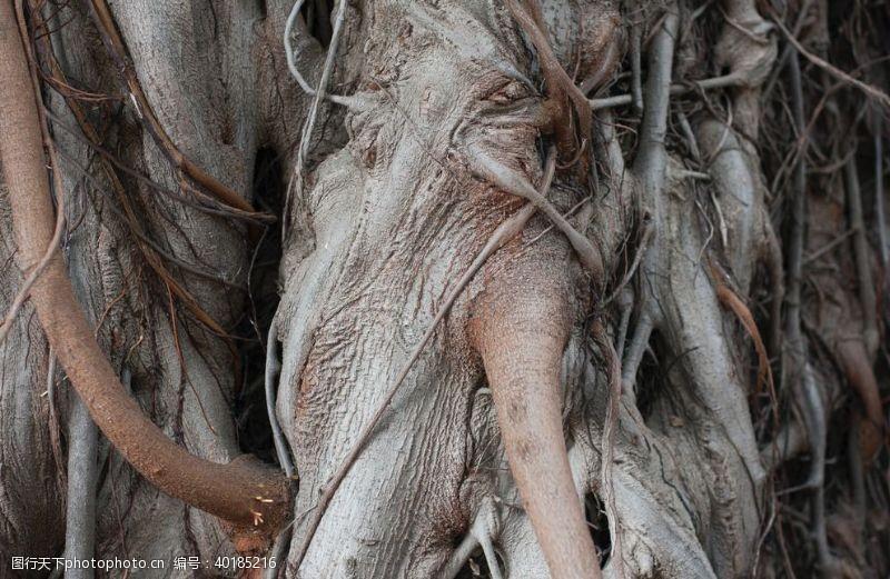 古树树根图片