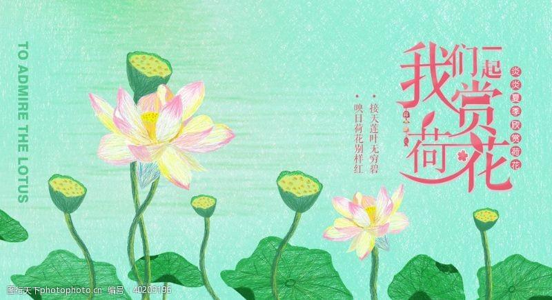 花瓣共赏荷花图片