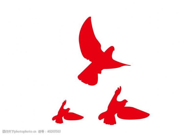 鸽子和平鸽图片