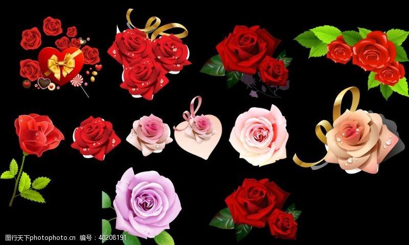 玫瑰花朵玫瑰花素材图片