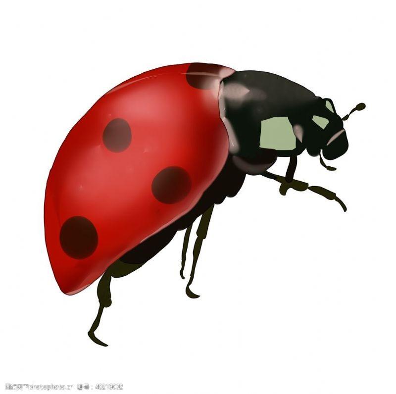 动物漫画手绘瓢虫图片