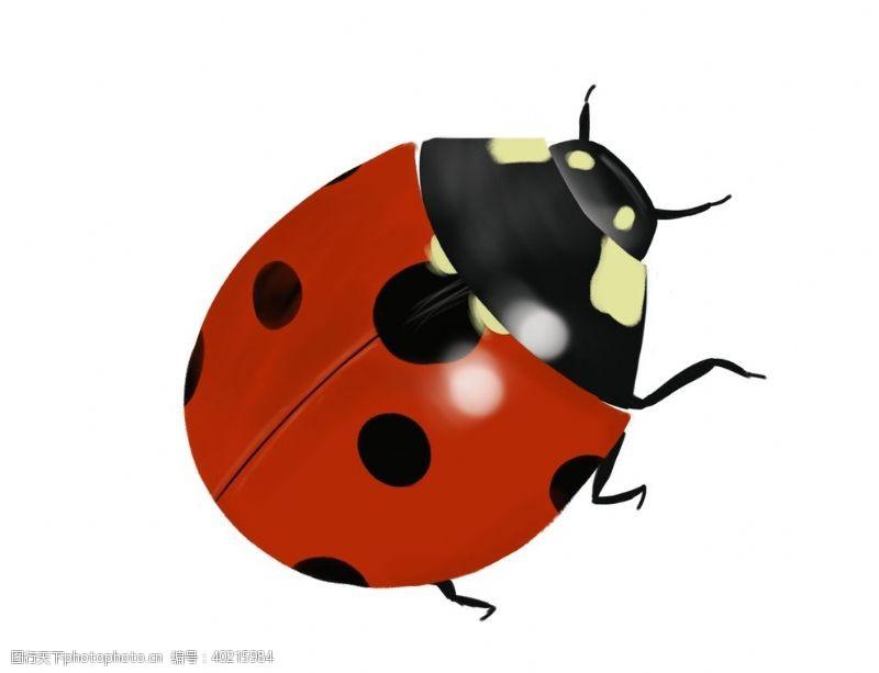 动物漫画手绘七星瓢虫图片
