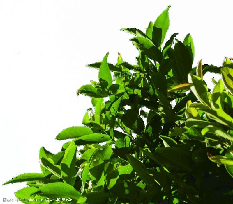 轮廓树叶树枝免抠透明素材图片