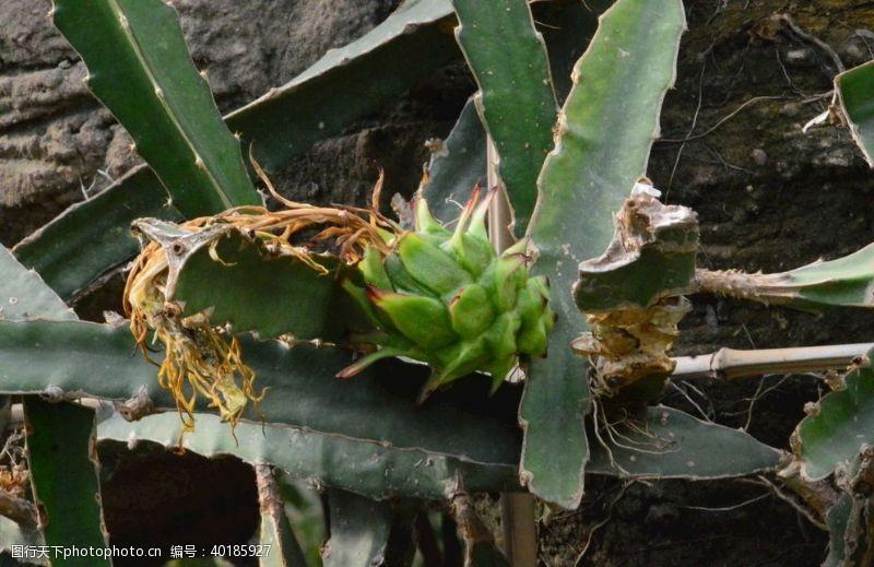火龙温室风景图片