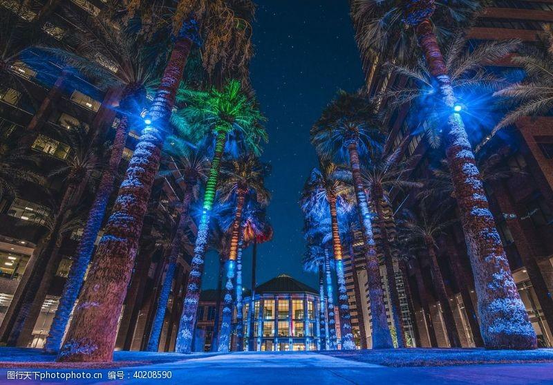 棕榈树城市夜景图片