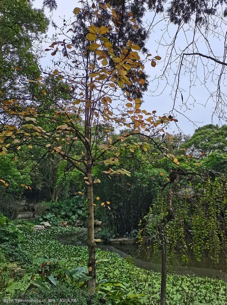 公园湖泊树林图片