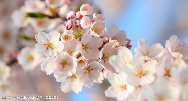 花背景桃花近景图图片