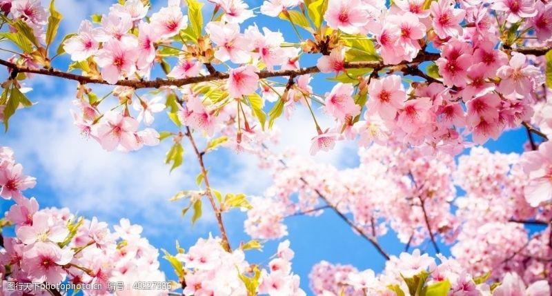 花背景桃花图片