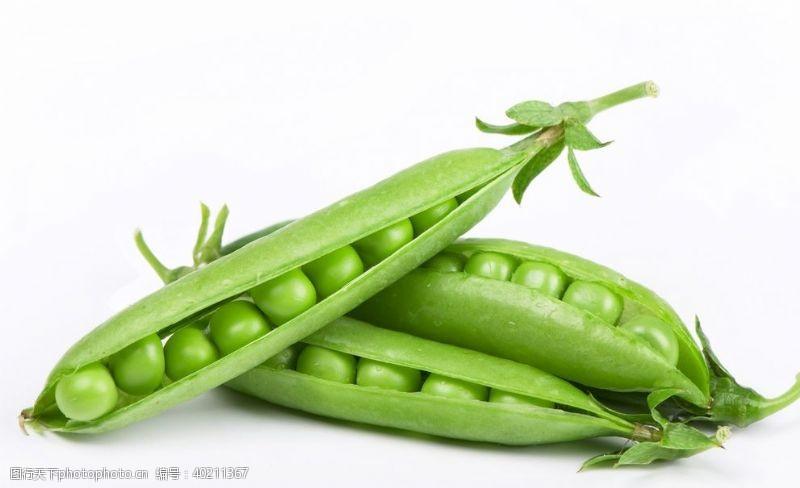 豌豆摄影图片