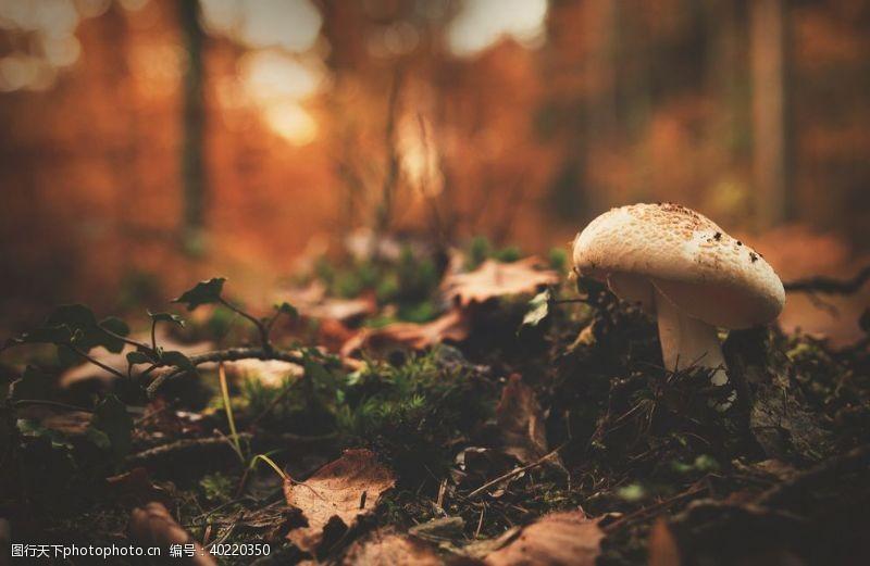 野蘑菇蘑菇图片