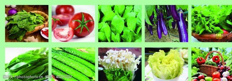 青菜蔬菜图片