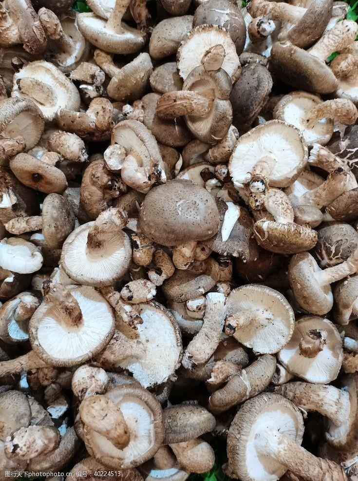 蘑菇香菇图片