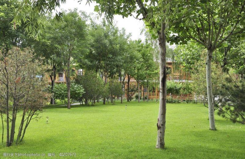 绿地园林地被林下草坪图片
