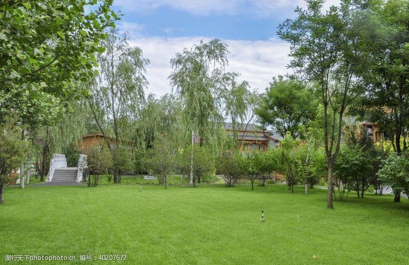 绿地园林地被绿色草地图片