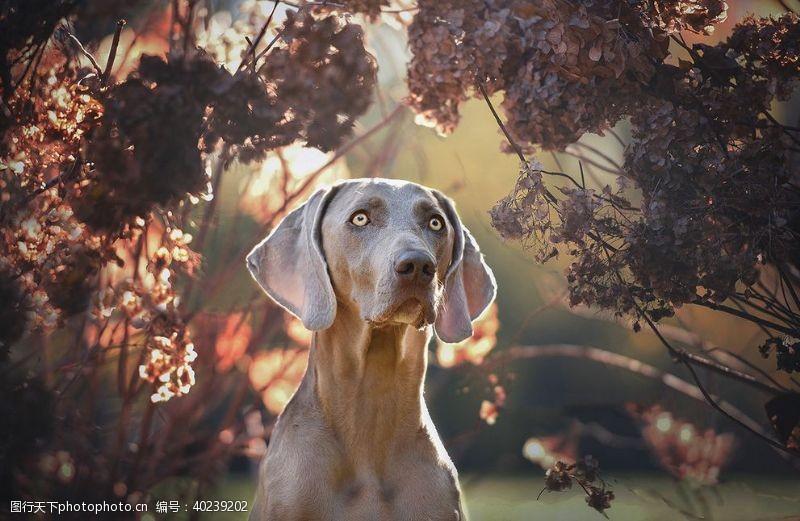 老鹰动物宠物狗猫图片