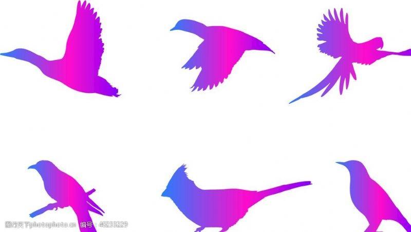 姿势飞鸟剪影素材图片