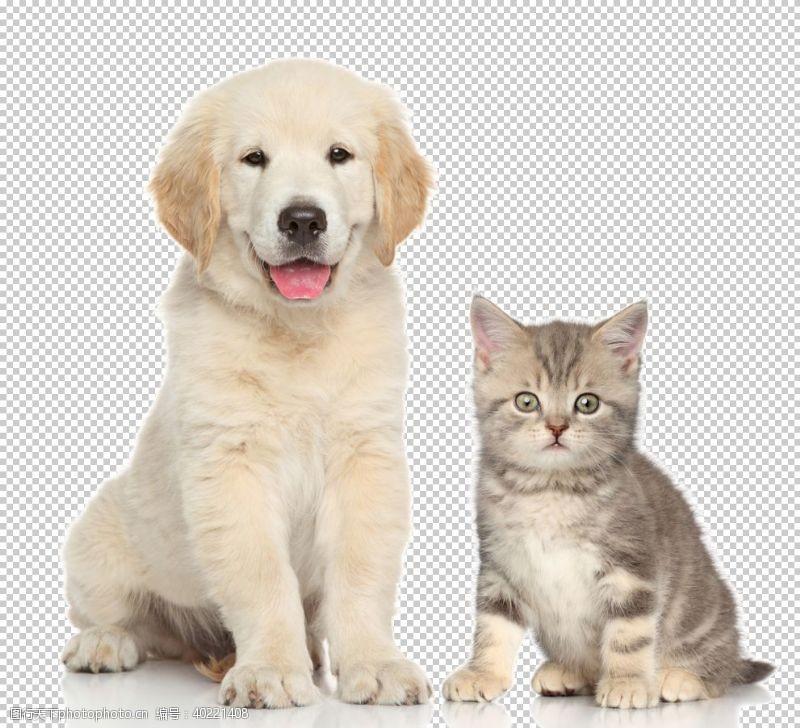 宠物店狗狗图片