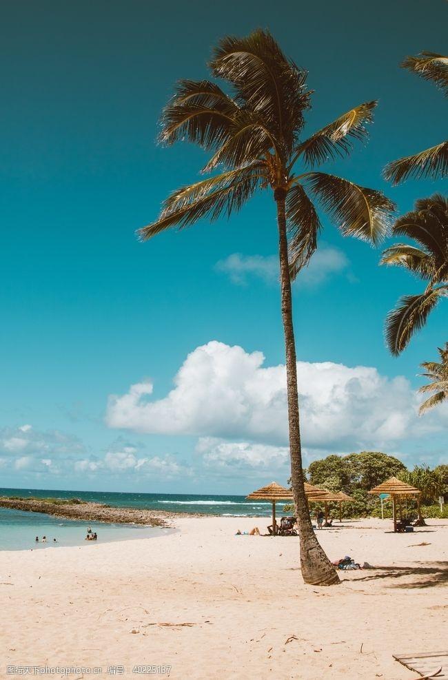 棕榈树海边图片