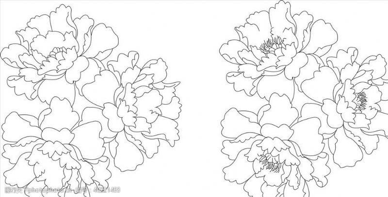 牡丹花花矢量图图片