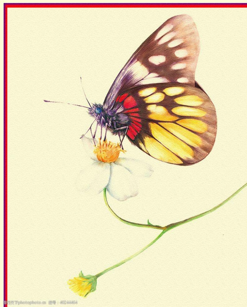 手绘花朵蝴蝶图片