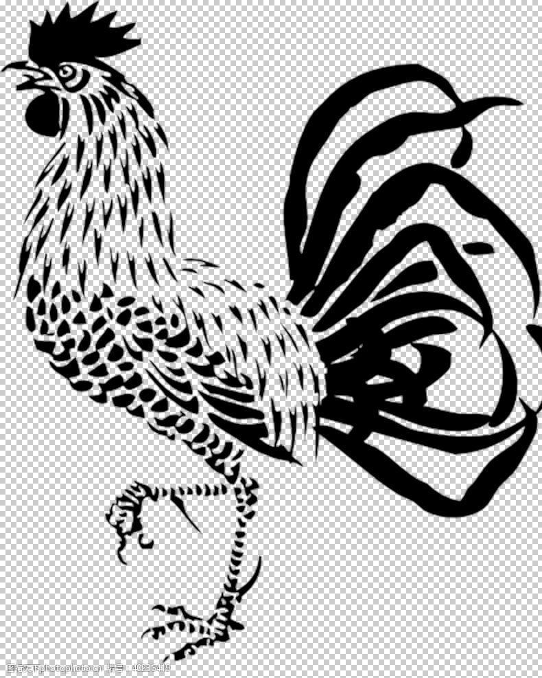 公鸡鸡图片