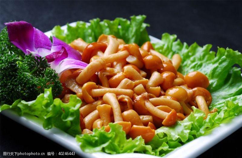 菌类滑菇图片