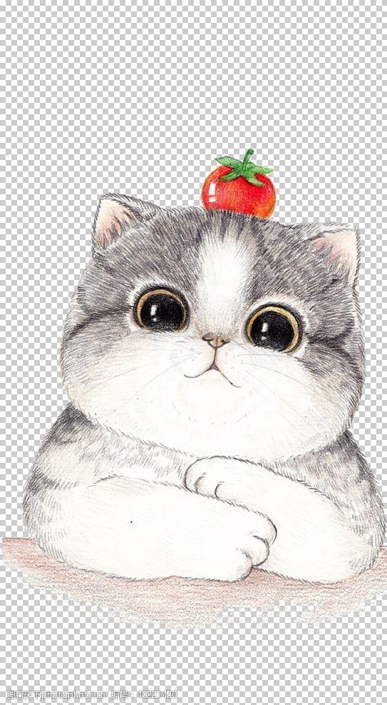宠物店猫图片