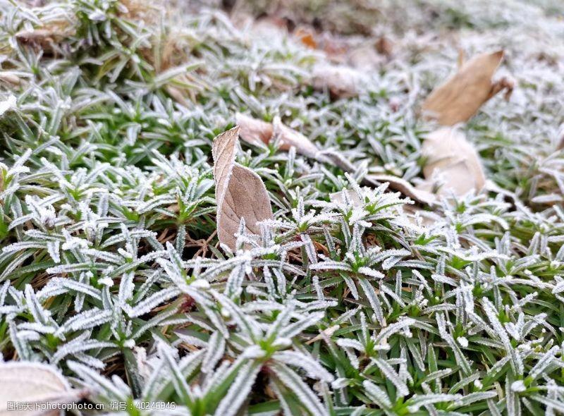 植物花草清晨秋霜打的草地图片