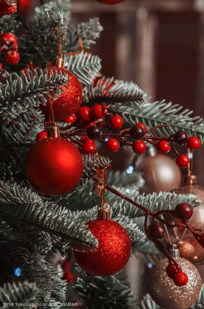 西方圣诞树图片