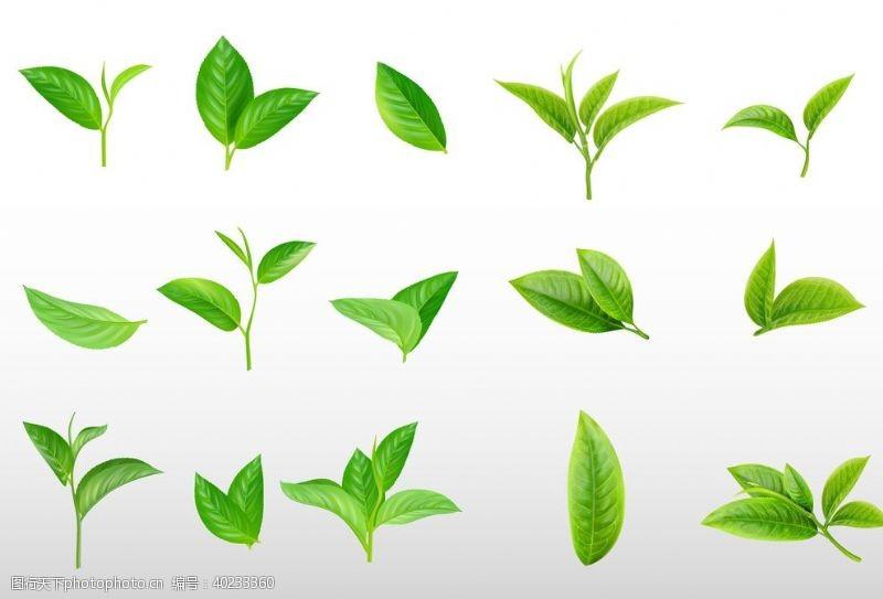 茶叶素材茶叶绿叶图片