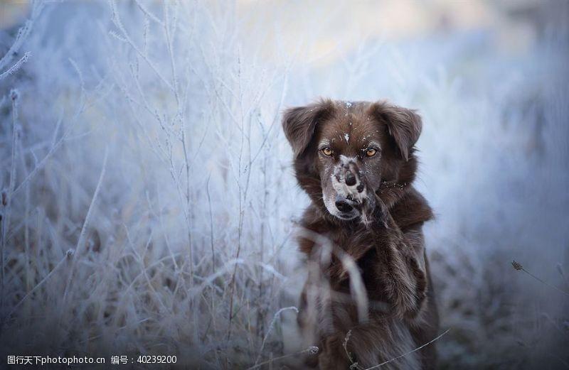 宠物广告动物宠物狗猫图片