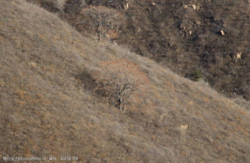 多彩孤独的树图片