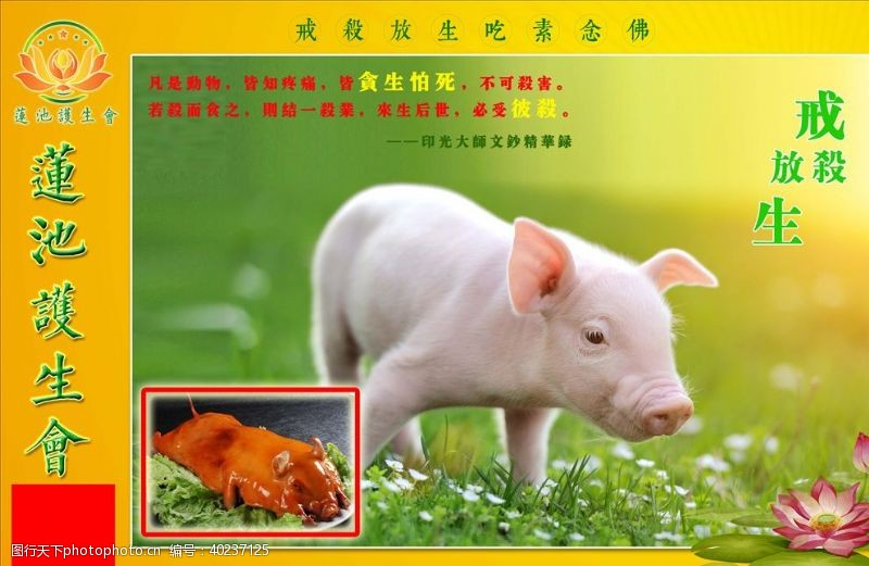 小猪护生展板图片