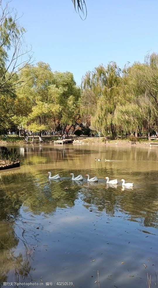 清澈湖水图片