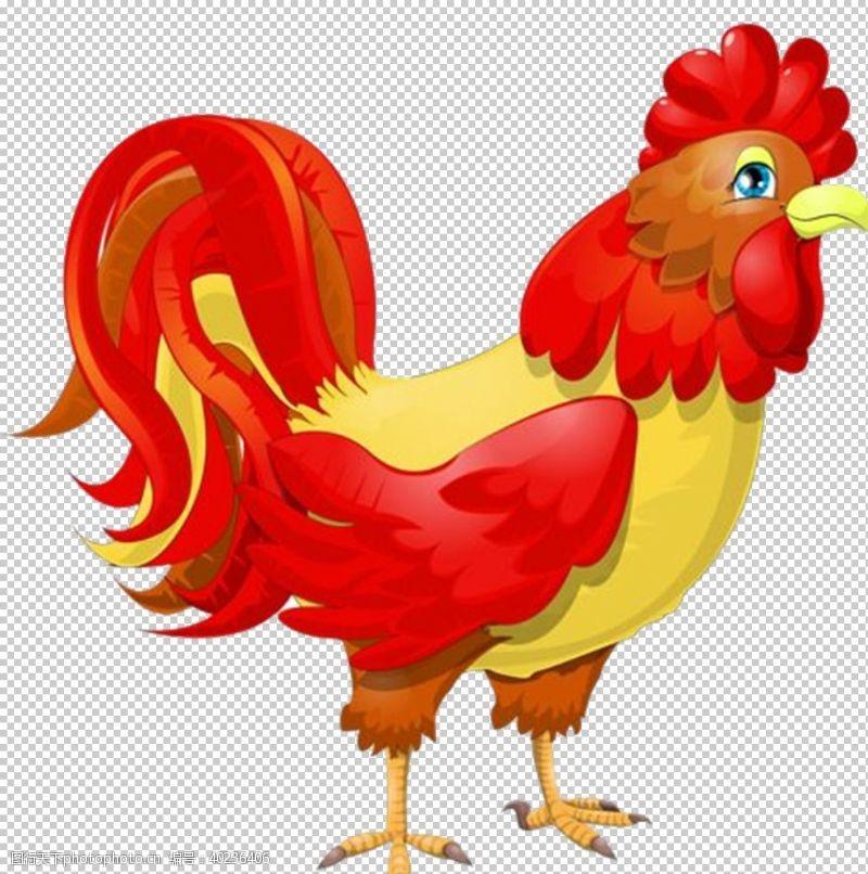 鸡毛鸡图片