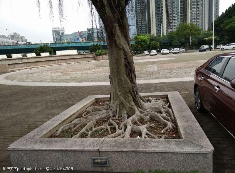 风景区树干图片