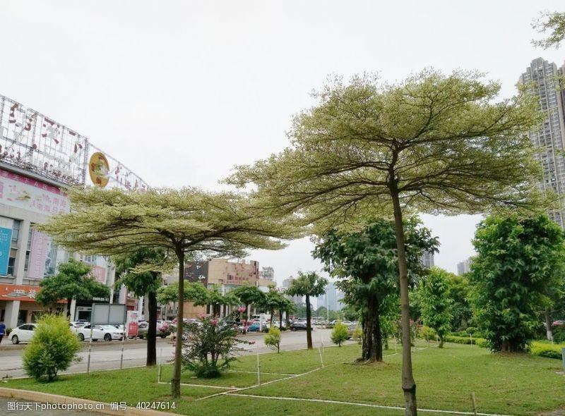 树苗树图片