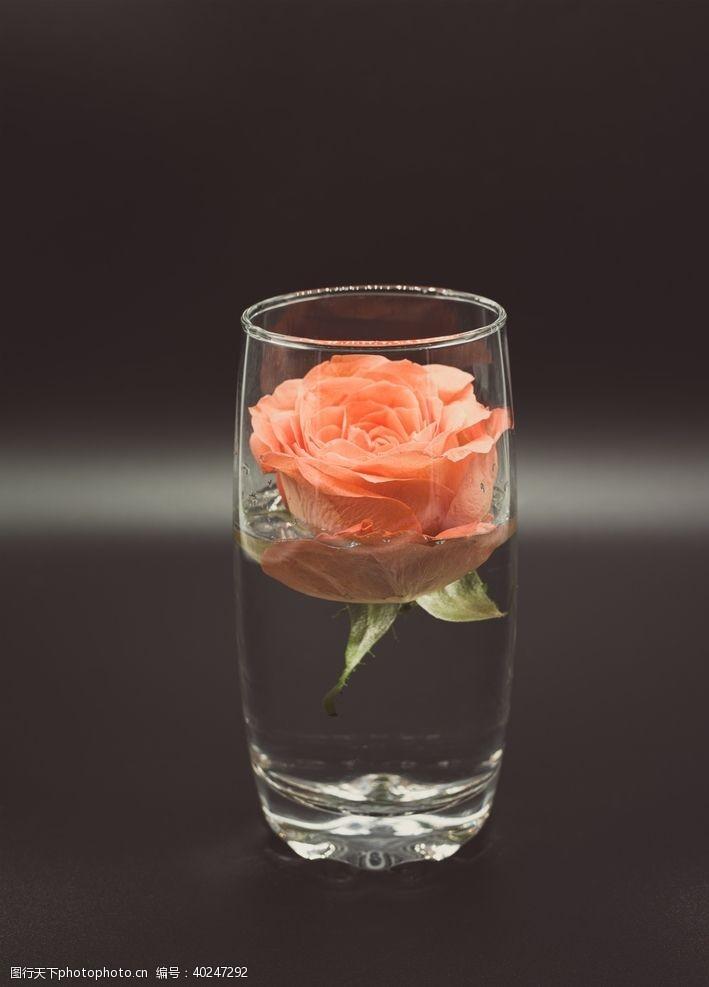 酒杯杯中花图片