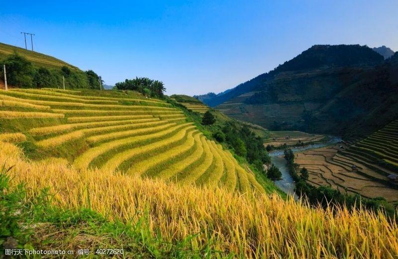 高清图片稻田梯田景观图片