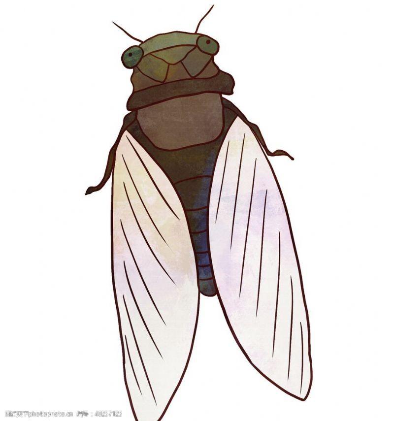 翅膀卡通夏日知了蝉手绘插画图片