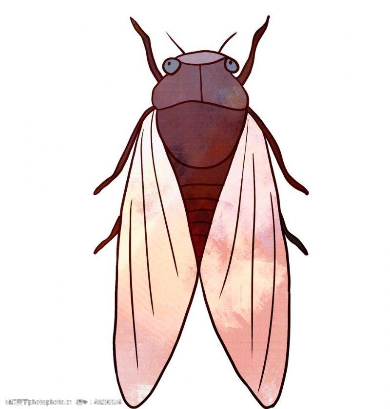 蝴蝶卡通夏日知了蝉手绘插画图片