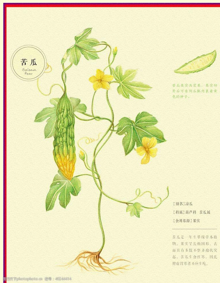 手绘花朵凉瓜图片