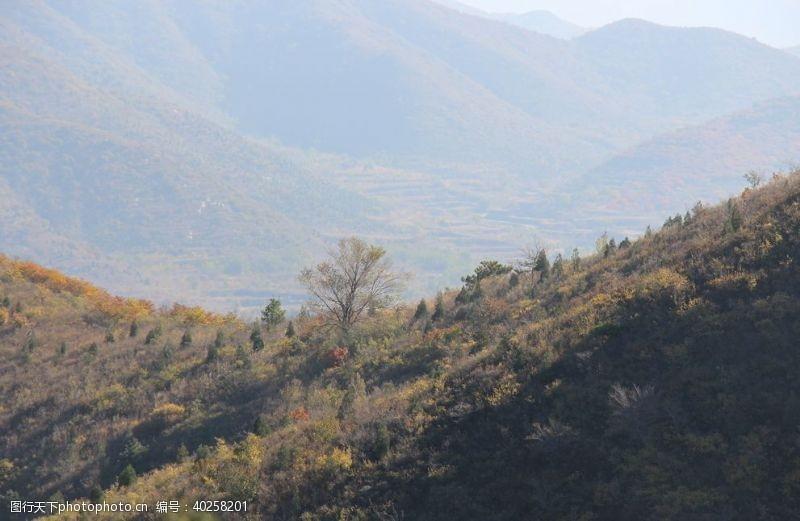 多彩秋孤树图片