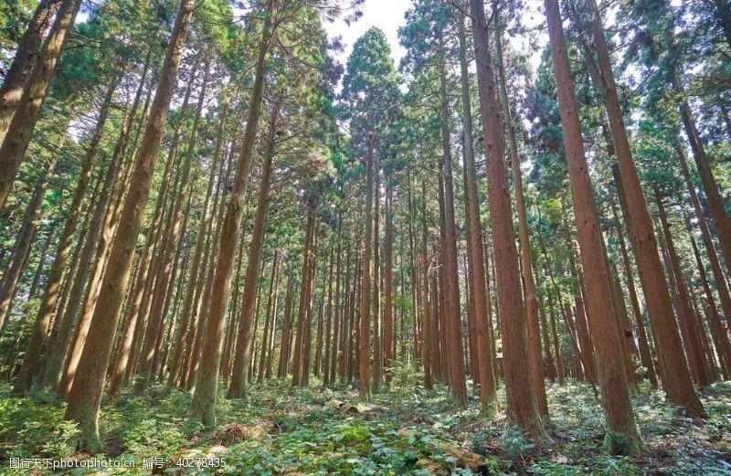 花草树木森林风景图片