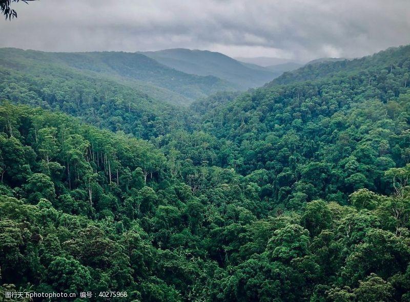 树林树图片