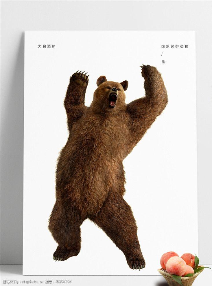 霸道熊图片