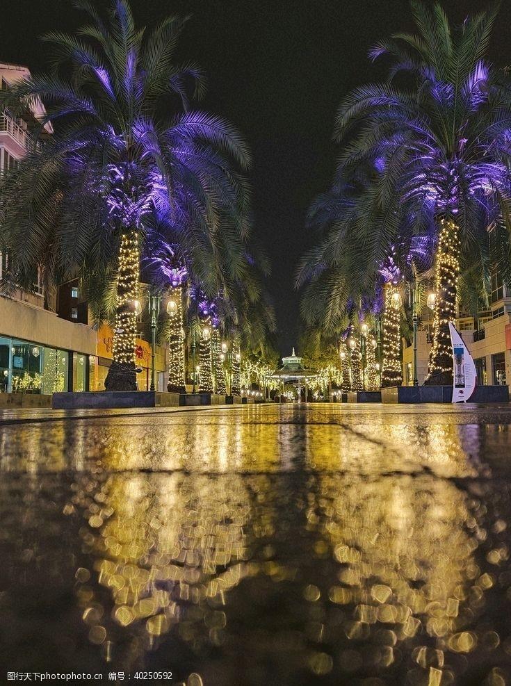 棕榈树雨后街头图片